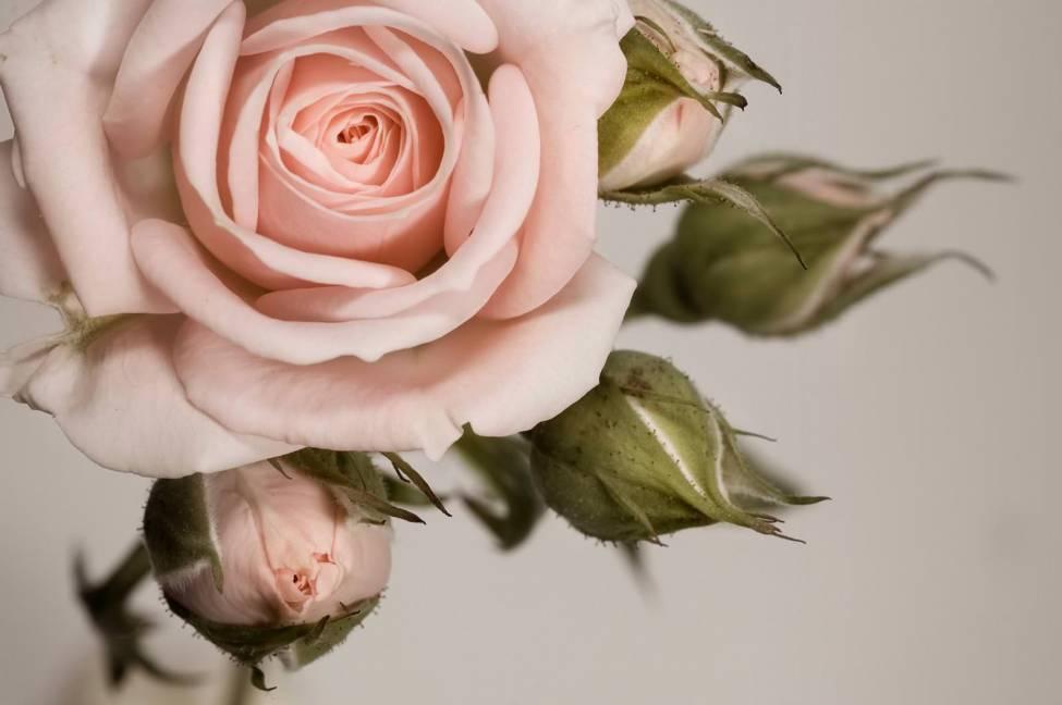 Как вдохновляться живымицветами длясозданияшелковых. Взгляд Юлии Федотовой