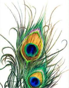 перья павлина хорошо использовать в цветах из шелка картинка