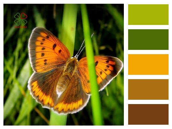 бабочка на цветке, цветовая раскладка