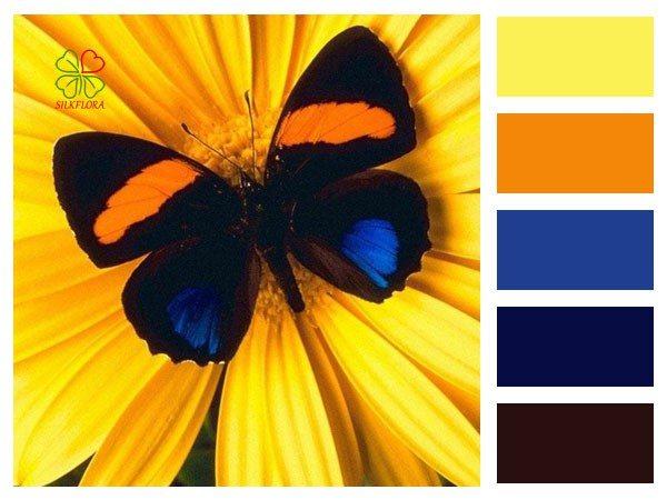 Живой цвет бабочки