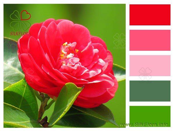 Красная камелия подбор цветов