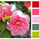 Розовая камелия с колористической подборкой