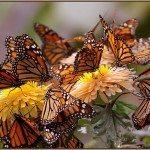 шелковые бабочки на шелковых цветах