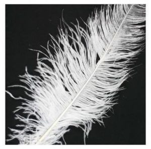 перо страуса в шелковой флористики изображение