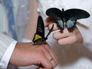 Бабочки на руках