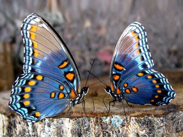 Выпустите на свободу бабочку своей души!