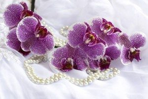 depositphotos_57638291-stock-photo-orchid-flowers-and-pearls-on