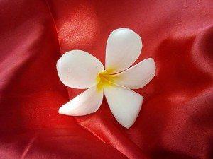 flowers-1820829__340