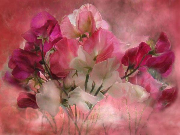 цветы фотокартина