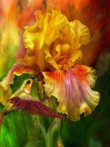 фото-фантазия цветок и птица
