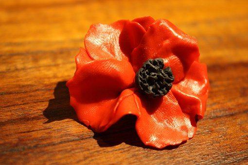 poppy-1815659__340
