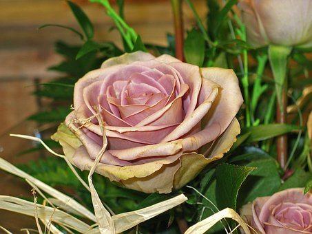 roses-2052672__340