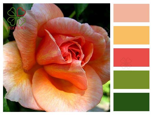Цветовой баланс розы