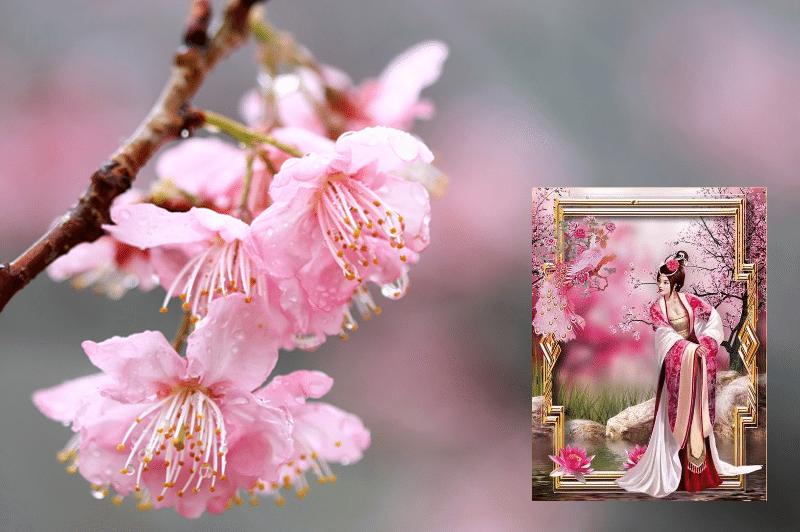 sakura-flower-1