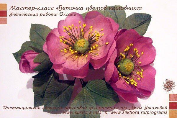 silk-canker-rose-u1