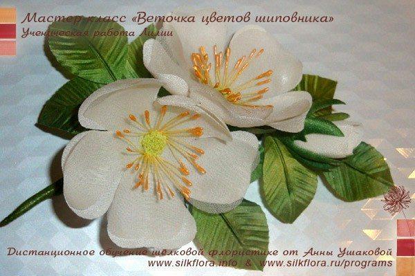 silk-canker-rose-u2