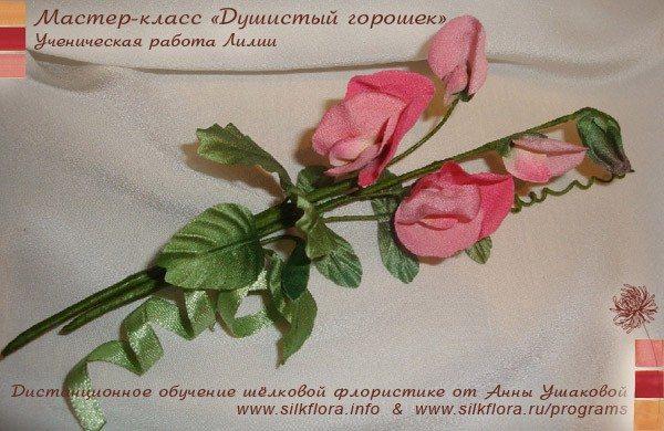 silk-goroshek-u2