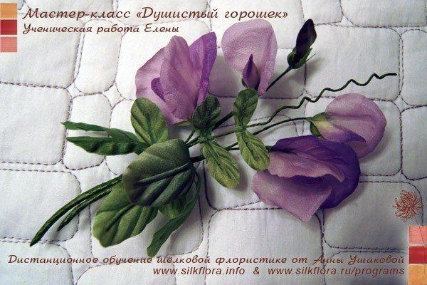 silk-goroshek-u4