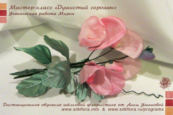 silk-goroshek-u51