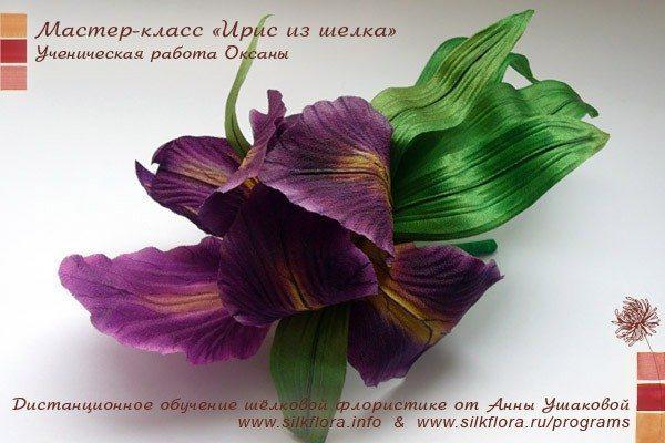 silk-iris-u1