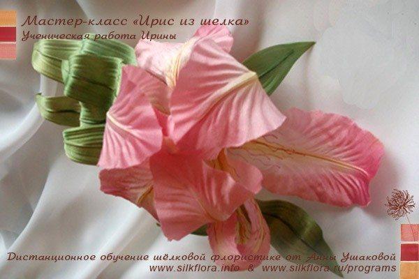 silk-iris-u2