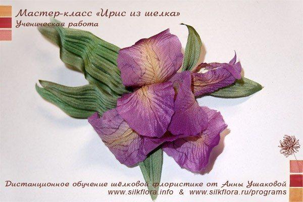 silk-iris-u3