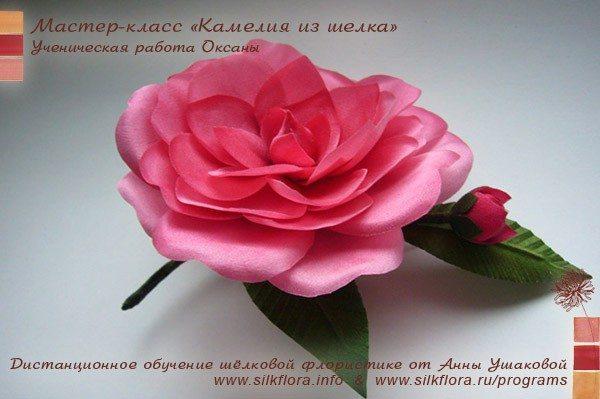 silk-kameliya-u2