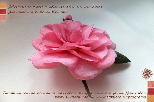 silk-kameliya-u6