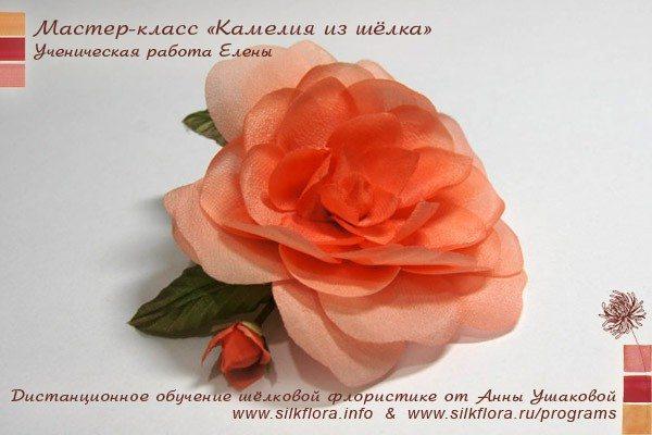 silk-kameliya-u7