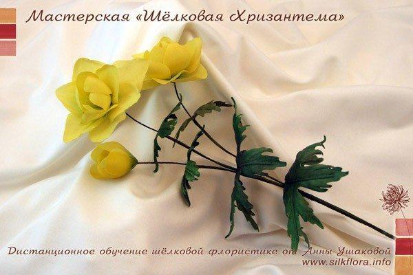 """"""",""""silkflora.info"""