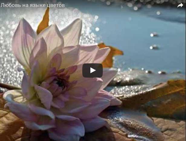 Красивые видео ролики с цветами из YouTube