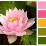 Водяная лилия в цветовом балансе