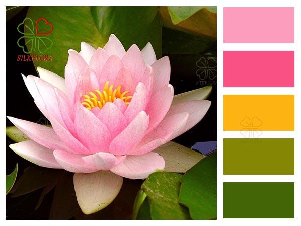 Окраска цветка водяной лилии